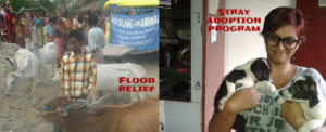 Relief to distressed animals