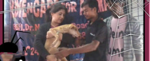 Adaption of stray animals by celebrity