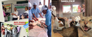 Small animal treatment